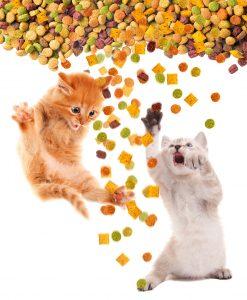 animalerie Alimentation chat animalerie 09