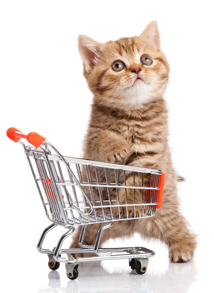 animalerie Alimentation chat animalerie 15