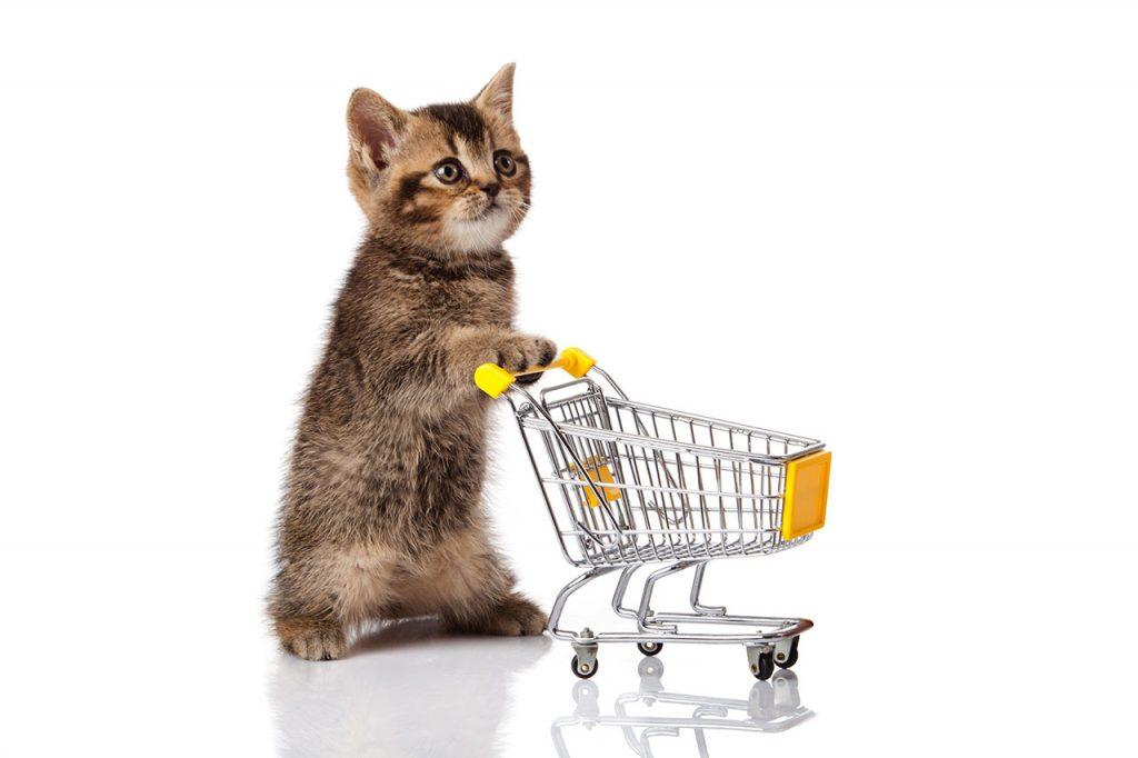 animalerie Alimentation chat animalerie 16