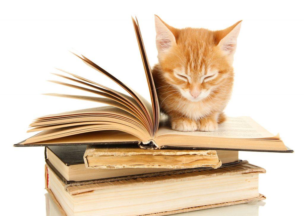 animalerie Education chat animalerie 02