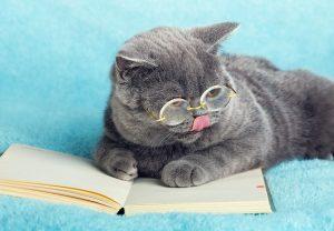 animalerie Education chat animalerie 06