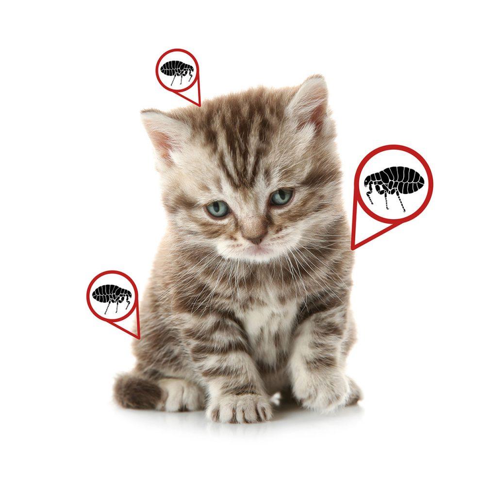 animalerie Hygiène chat animalerie 08
