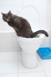 animalerie Hygiène chat animalerie 16