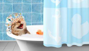 animalerie Hygiène chat animalerie 17