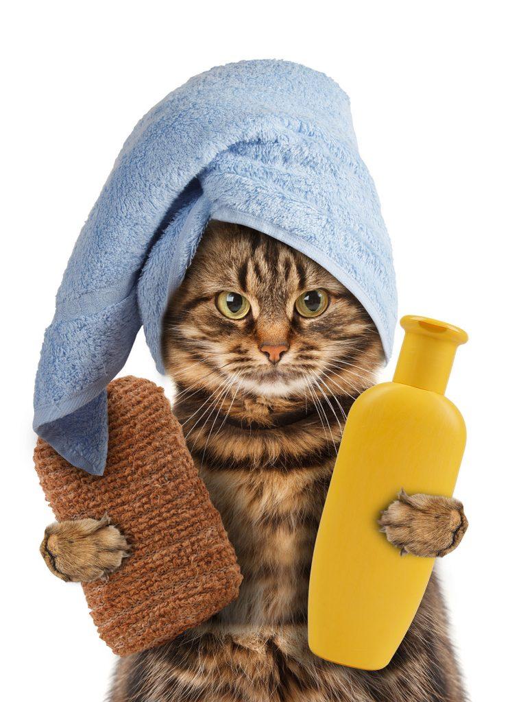 animalerie Hygiène chat animalerie 18