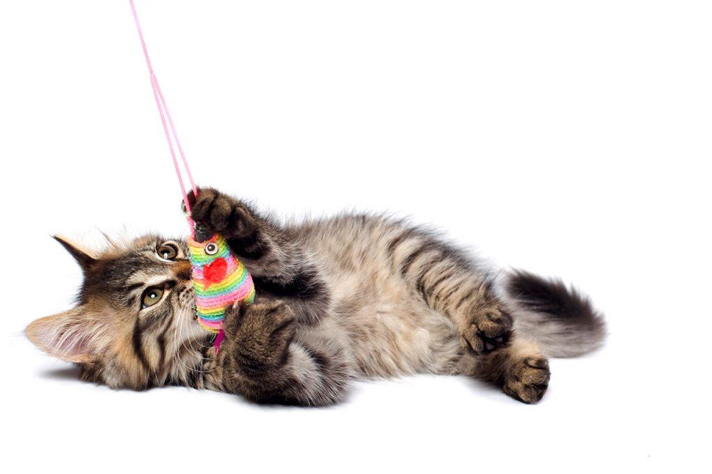 animalerie Ludique chat animalerie 06
