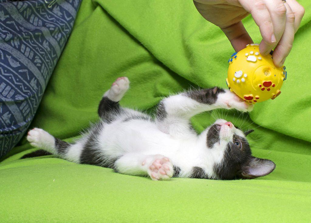 animalerie Ludique chat animalerie 09