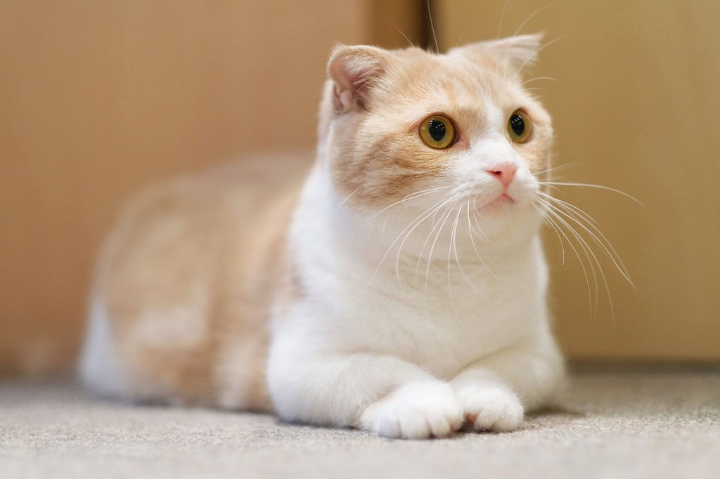 animalerie Munchink animalerie chat00
