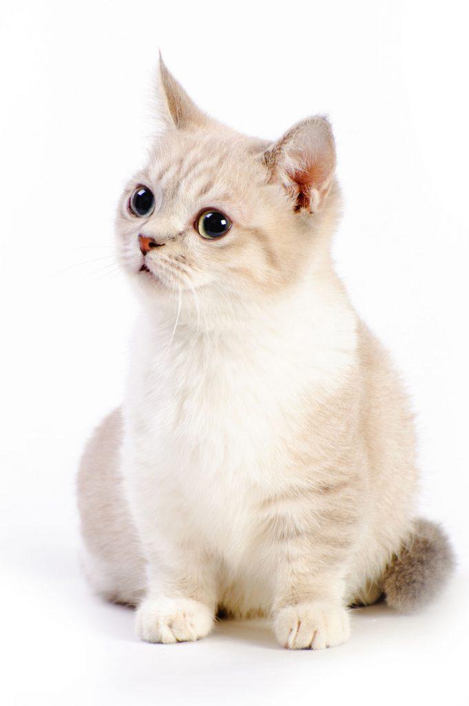 animalerie Munchink animalerie chat05
