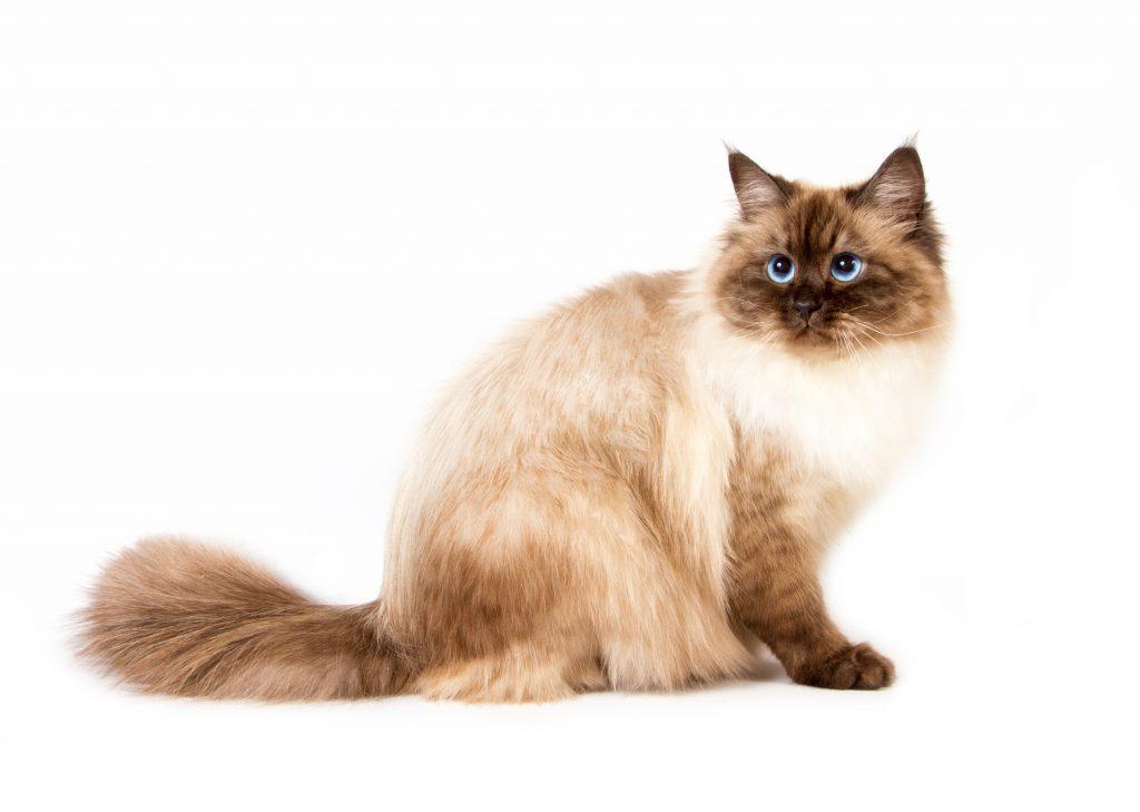 animalerie Neva Masquarade animalerie chat deposit 3