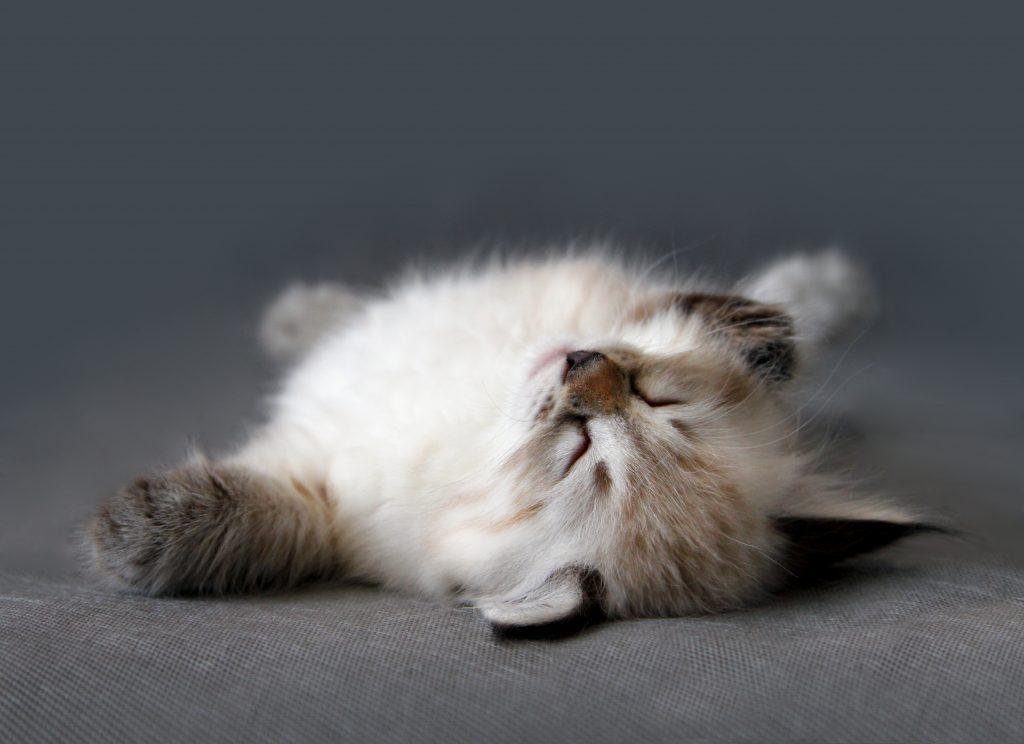 animalerie Neva Masquarade animalerie chat deposit 6