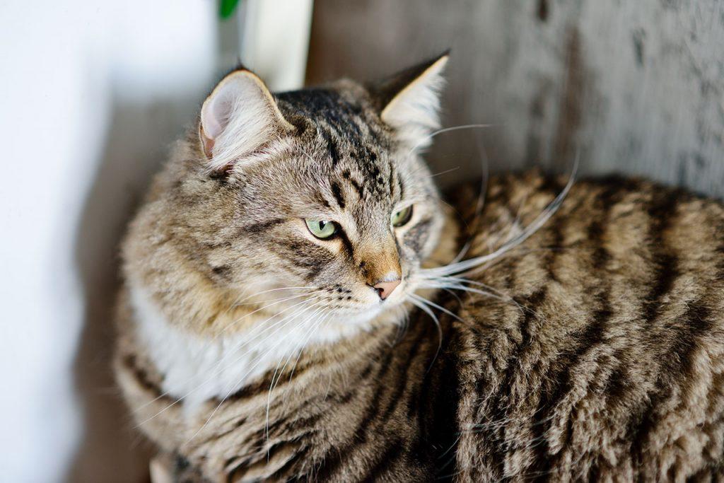 animalerie Siberien animalerie chat00