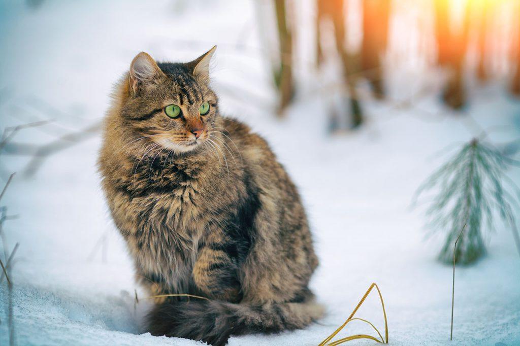 animalerie Siberien animalerie chat02