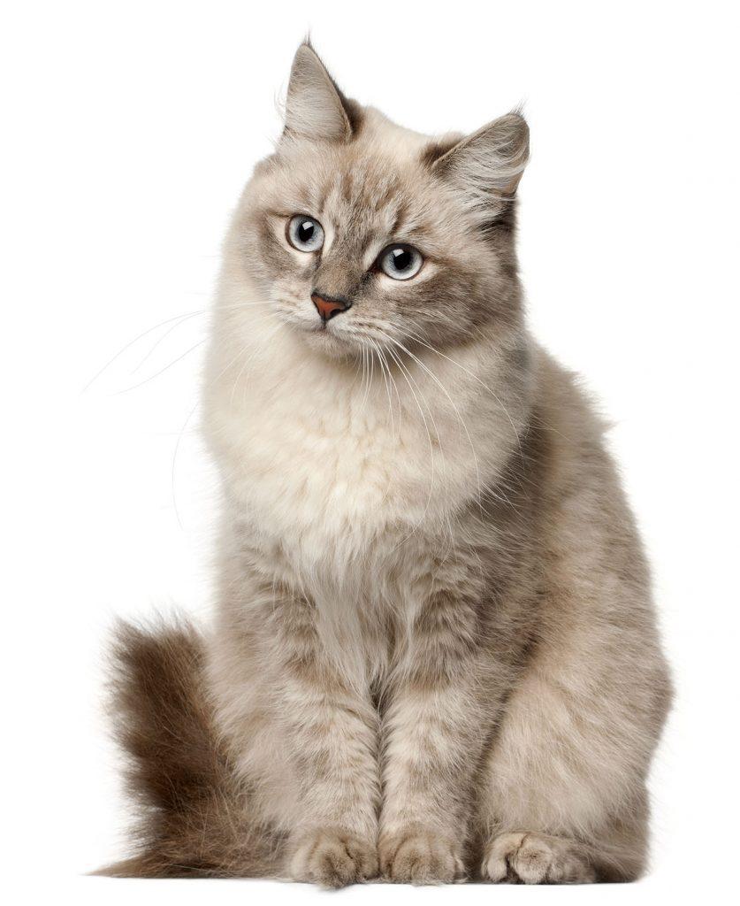 animalerie Siberien animalerie chat05