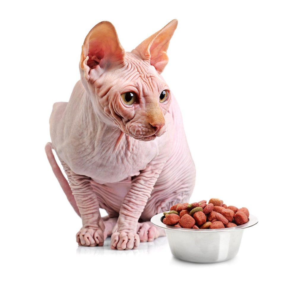 animalerie Sphynx animalerie chat03