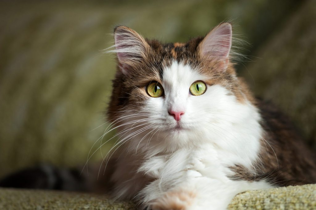 animalerie angora turc animalerie chat 8 scaled 1