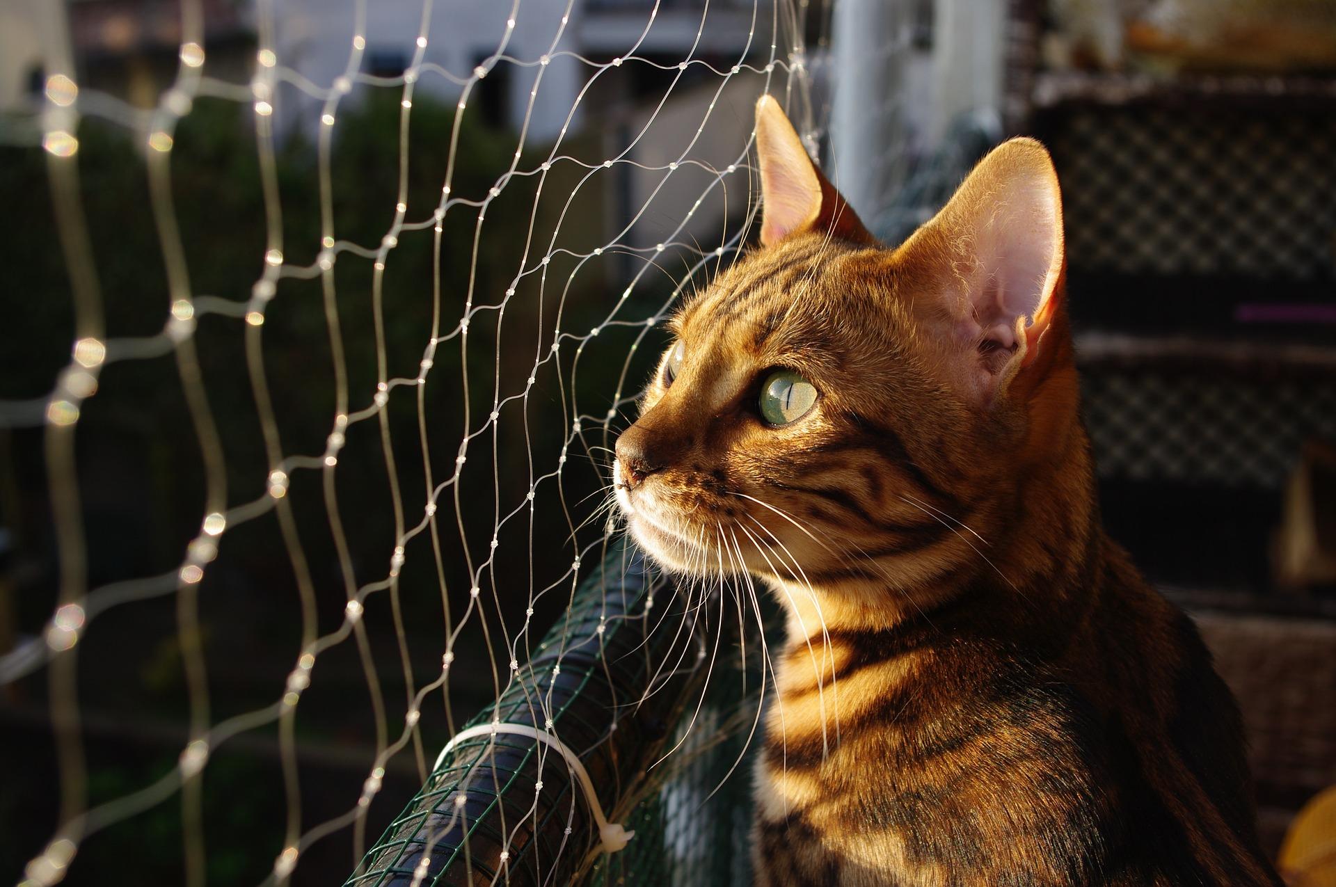 animalerie bengal animalerie chat 10