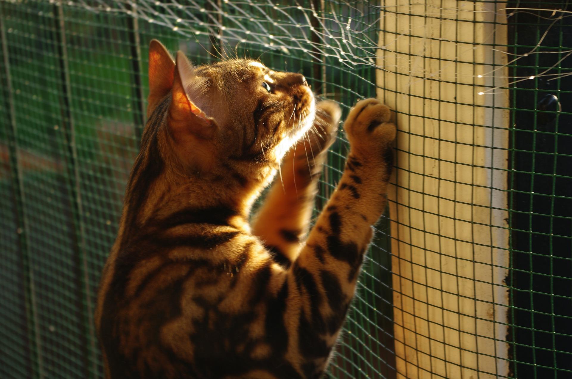 animalerie bengal animalerie chat 5