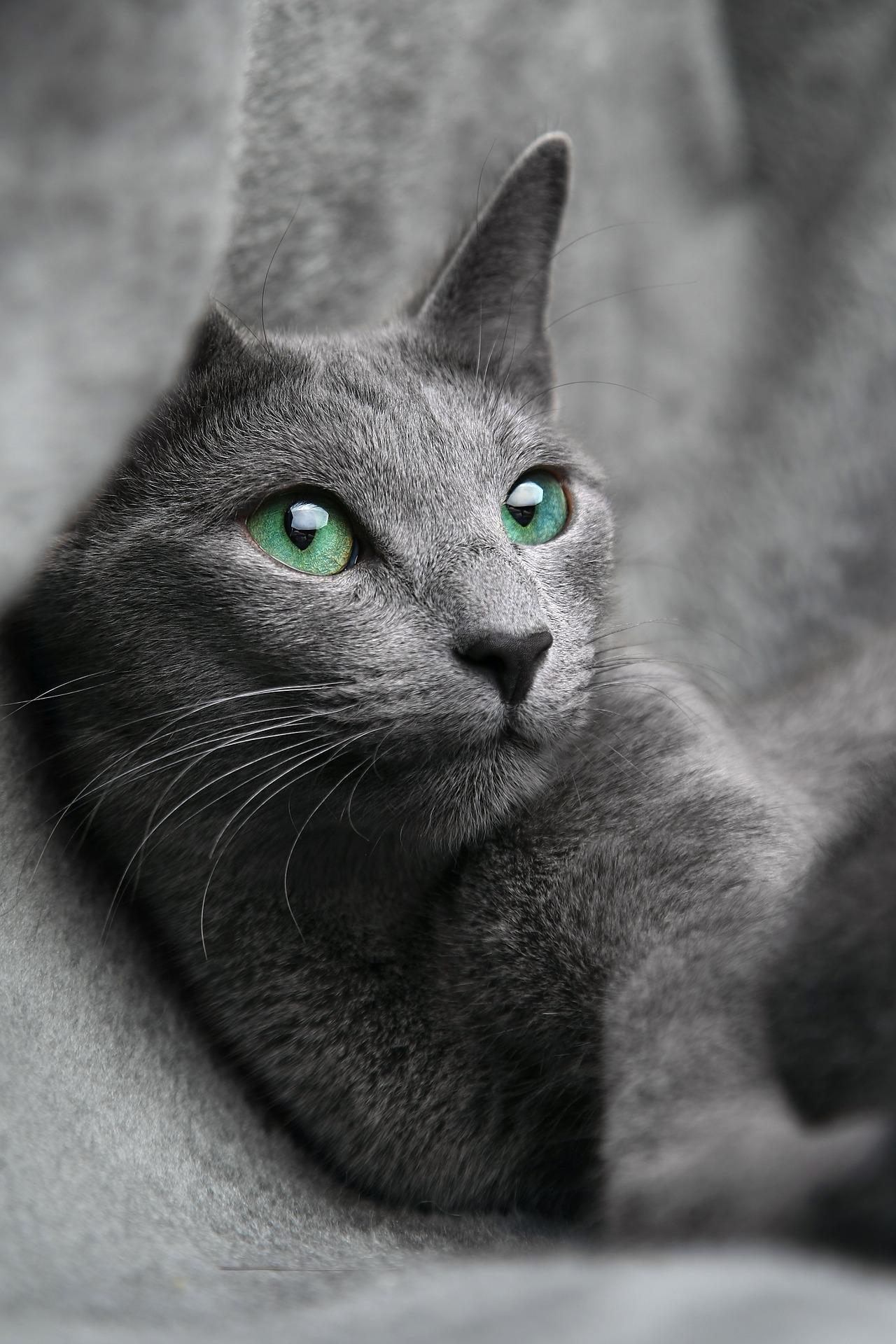 animalerie bleu russe animalerie chat 14