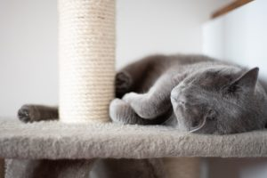 animalerie bleu russe animalerie chat 5