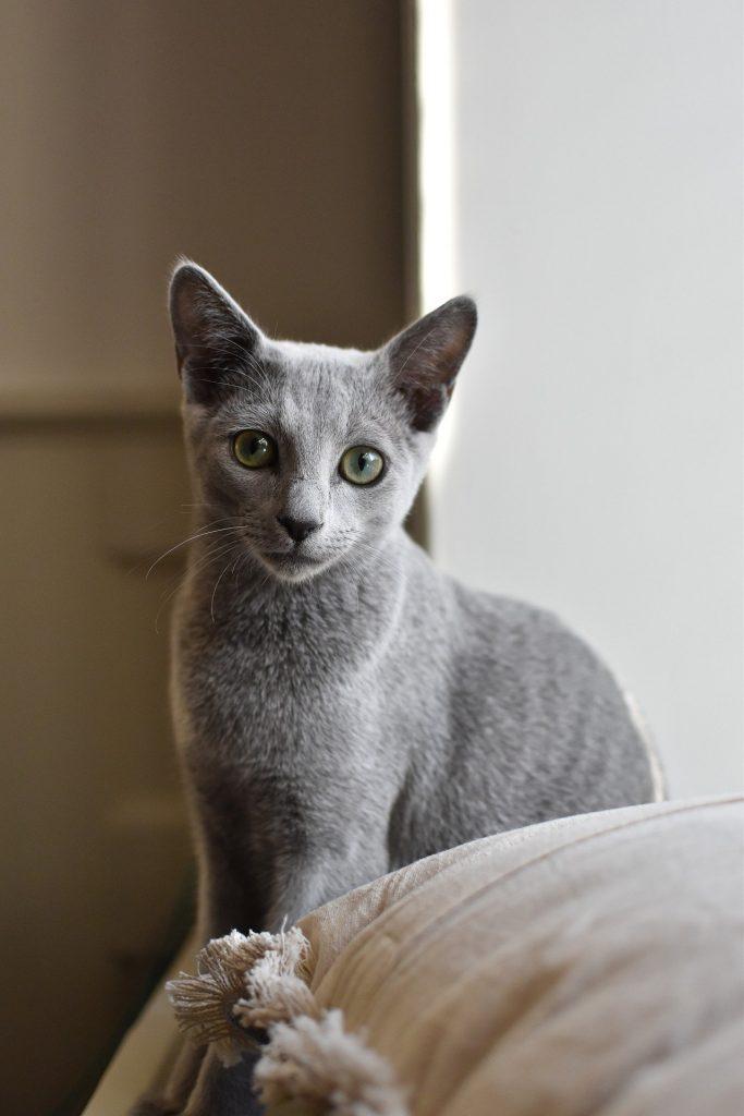 animalerie bleu russe animalerie chat 7