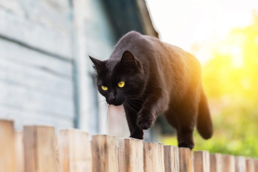 animalerie bombay animalerie chat 4 1 scaled 1