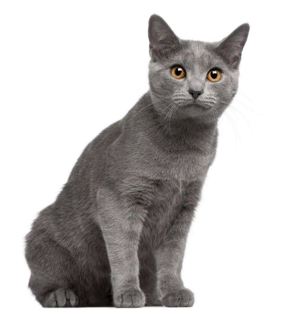 animalerie chartreux animalerie chat 18 scaled 1