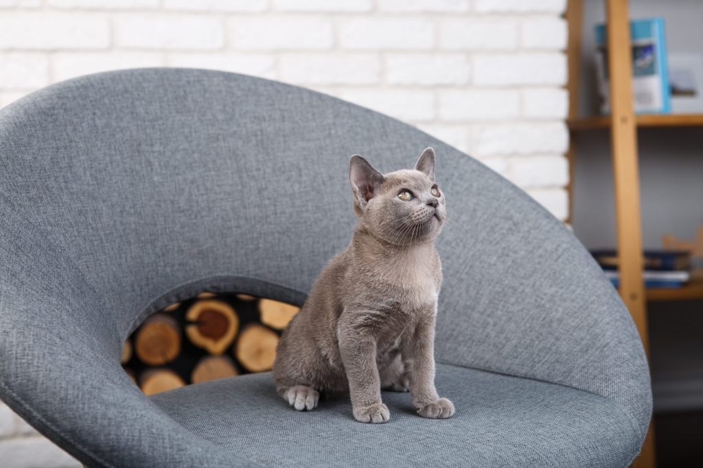 animalerie chartreux animalerie chat 24 scaled 1