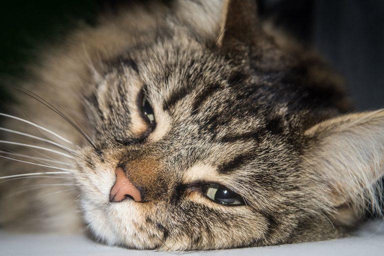 animalerie norvegien animalerie chat 15