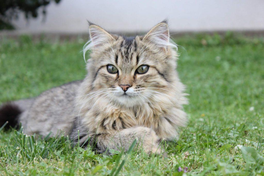 animalerie norvegien animalerie chat 171