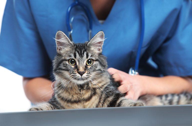 animalerie santé chat animalerie 11