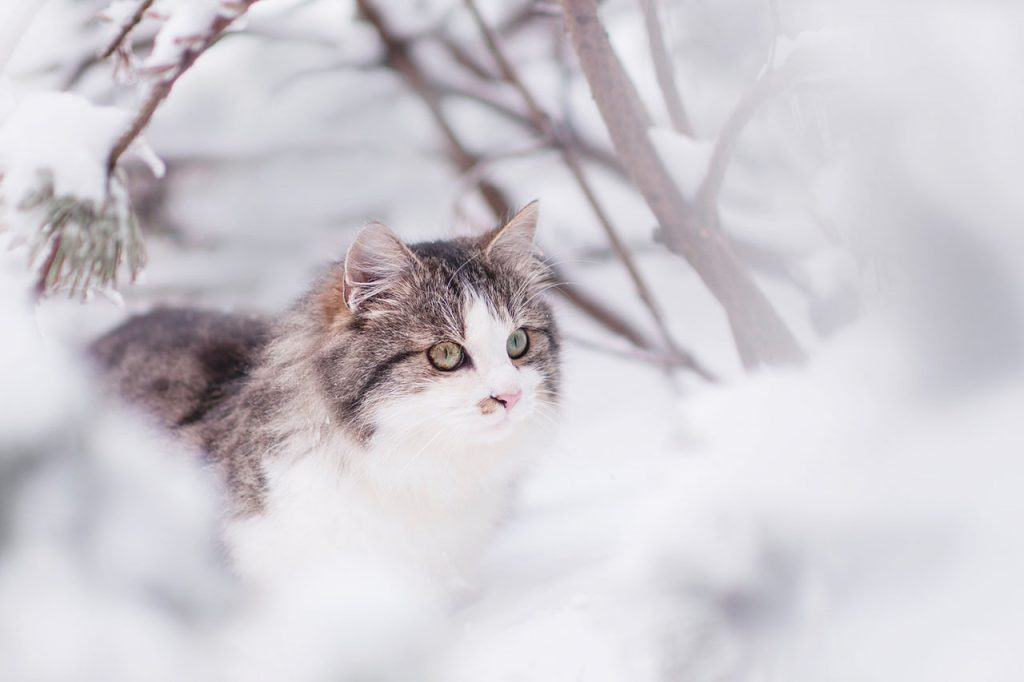 animalerie siberien animalerie chat 2