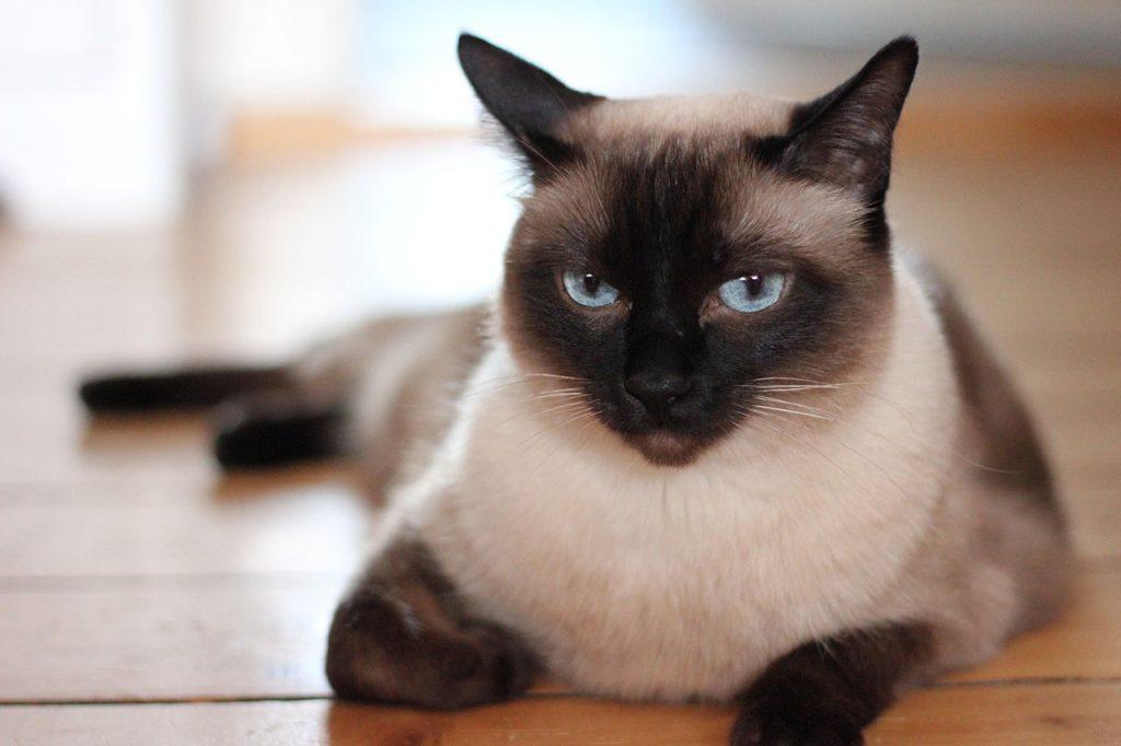 animalerie thai animalerie chat 5