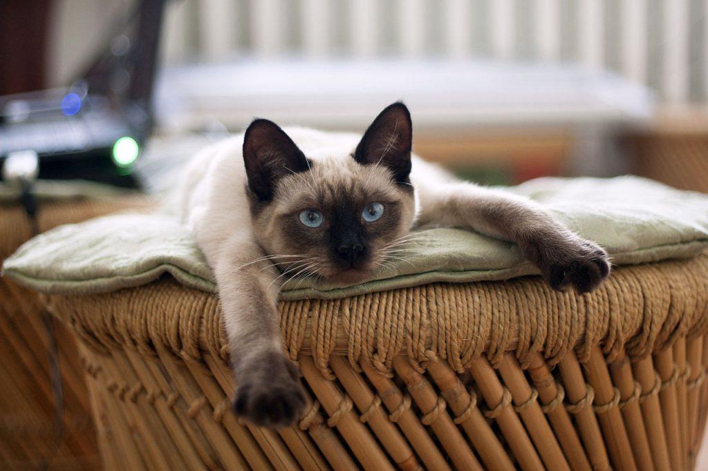 animalerie thai animalerie chat 8