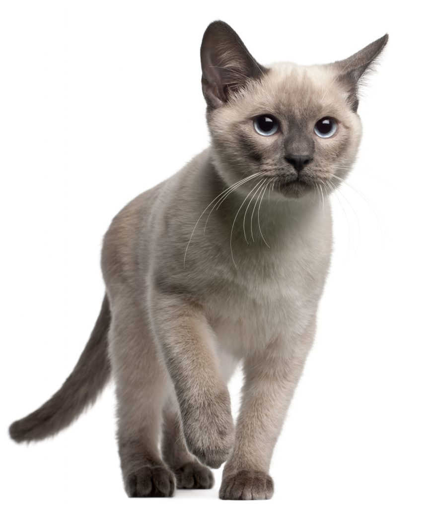 animalerie thai animalerie chat deposit 1