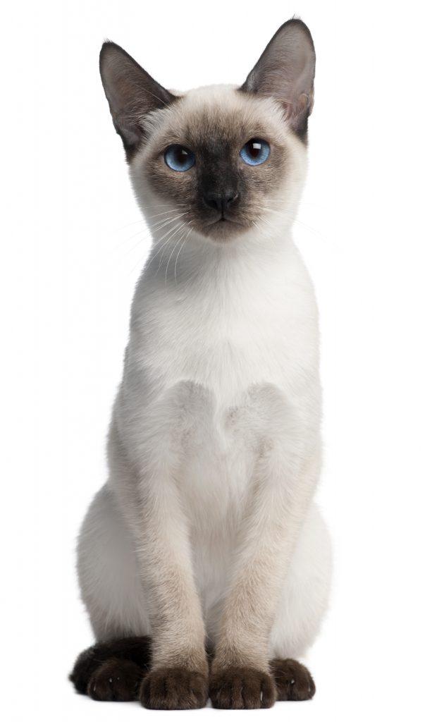 animalerie thai animalerie chat deposit 2