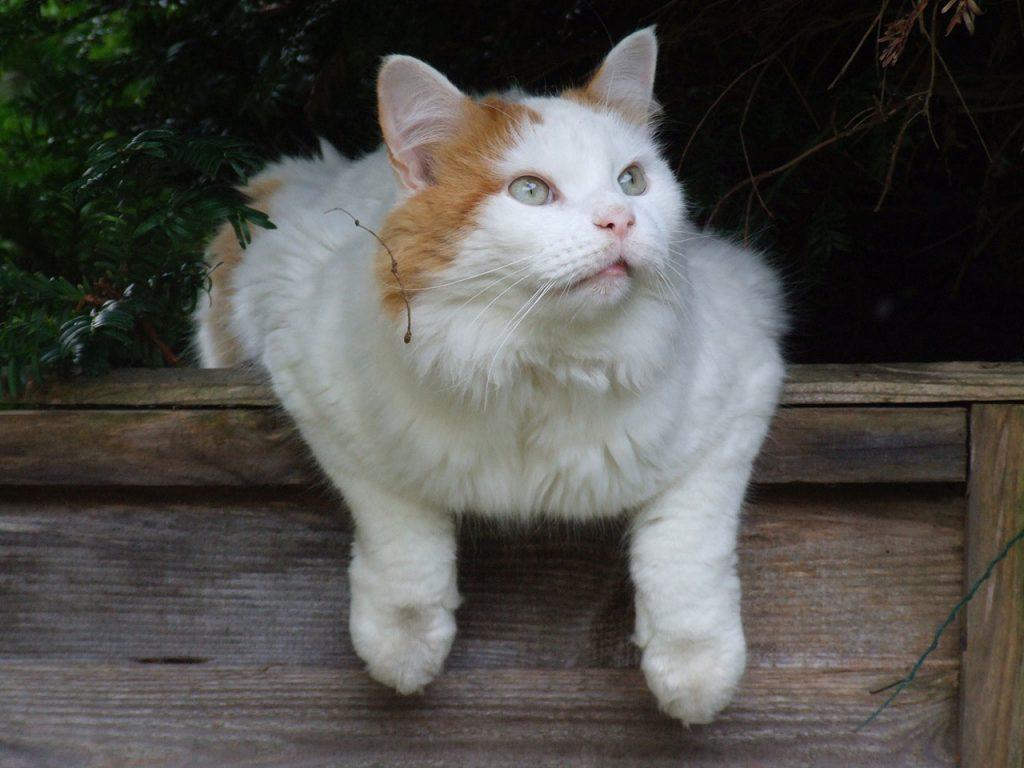animalerie turc de van animalerie chat 5