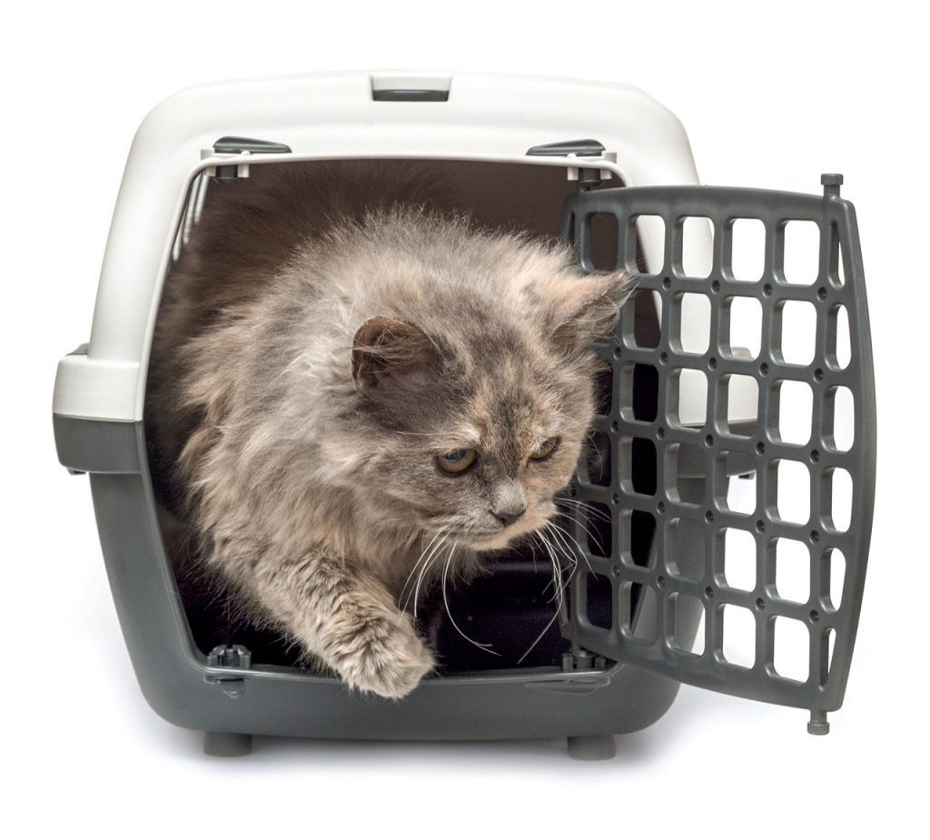 animalerie voyage chat animalerie 02