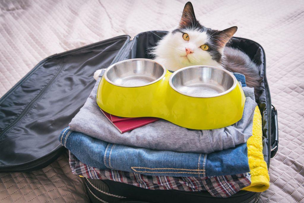 animalerie voyage chat animalerie 04