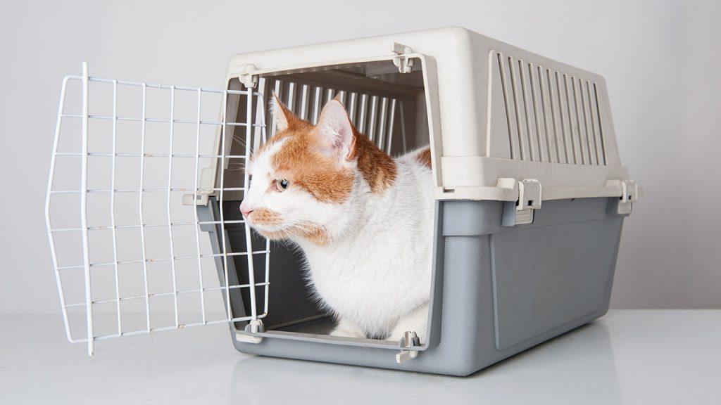 animalerie voyage chat animalerie 06