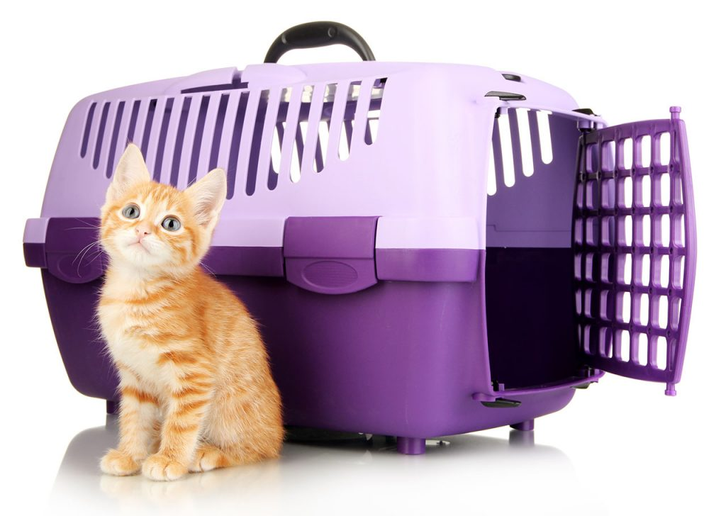 animalerie voyage chat animalerie 08