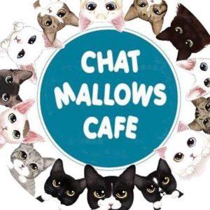 animalerie 06 ChatMallowsCafé Paris 01