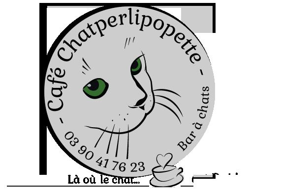 animalerie 13 ChatperlipopetteCafé Strasbourg 01
