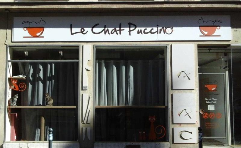 animalerie 14 LeChatPuccino Rennes 07