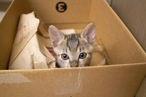 animalerie carton animalerie chat 1