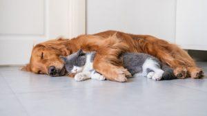 animalerie chien animalerie chat 5
