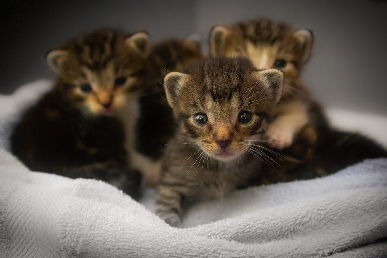 animalerie gestation animalerie chat 1
