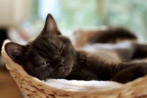 animalerie gestation animalerie chat 2