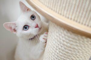 animalerie griffoir animalerie chat pixa