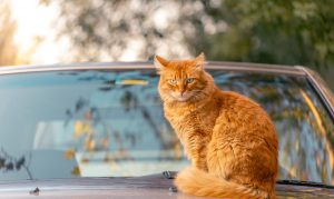 animalerie voiture animalerie chat 3